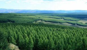 中国将推进大规模国土绿化行动