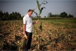 中国转基因大豆申请阿根廷商业化种植 最快到11月中上旬可正式被批准