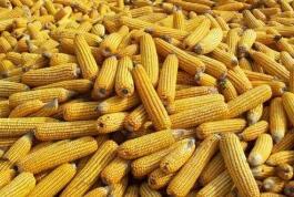 商务部就WTO发布美诉我粮食补贴争端案专家组报告发表谈话