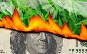 """从现金到灰烬:研究发现大麻公司平均""""寿命""""仅为数月"""