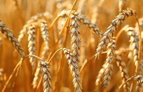 日媒:新冠疫情冲击全球农业供应链